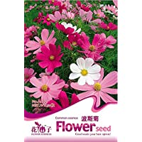1 Original Pack, 50 semi / pacchetto, semi Cosmos Sensation Flower Mix bipinnatus messicano aster Annual Herb #
