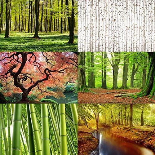 Vliestapete – Top Wald Tapeten – Fototapete Breit