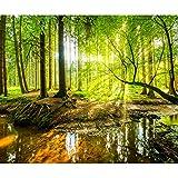 decomonkey | Fototapete Wald 350x256 cm XXL | Tapete | Wandbild | Bild | Fototapeten | Tapeten | Wandtapete | Wanddeko | Wandtapeten | Natur Landschaft Baum