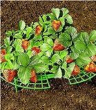 Supporto per pianta di fragole, 5 pezzi