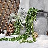 justoyou 2Stück Künstliche Sukkulenten Pflanzen String of Pearls Hängepflanzen für Outdoor Hochzeit Garten Home Decor, Textil, String of Pearls Hanging Plants, 2