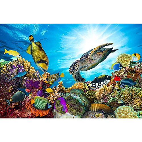 Pitaara Box Coral Reef with Fishes & Sea Turtle Canvas Painting MDF Frame 24 X 16Inch - Home Essentials Reef