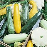 Risitar Graines - 50pcs Rare Mélange de courgettes (jaune, verte et blanche), Graines biologiques Graines de légumes résistante au froid