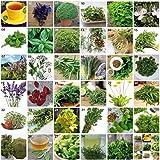Shoopy Star Sommer Savory 6200 Samen Satu: Kräutersamen Mediterranean Garden 25 Sorten Aromatische Heil Gewürze Pflanzen