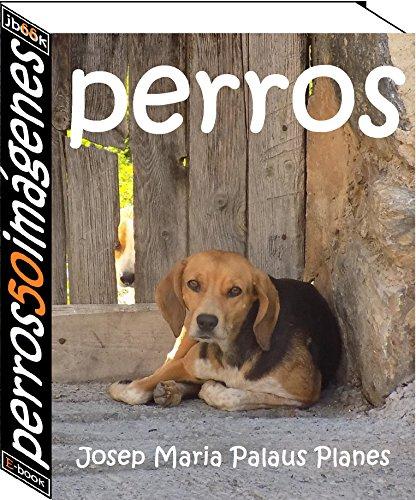 perros (50 imágenes)