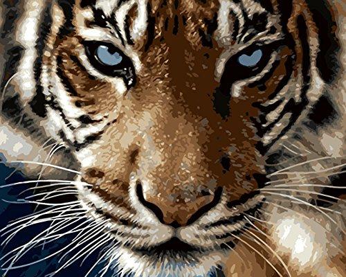 WATAKA DIY Malen Nach Zahlen für Erwachsene und Kinder Vorgedruckt Leinwand-Ölgemälde Kits Home Haus Dekor mit MEHRWEGVerpackung - Tiger 16 * 20 Inch