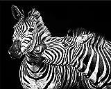 artissimo, Dekopanel, Deco Panel, ca. 50x40cm, PE6274-PA, Tiere: Zebra Kiss, Bild, Wandbild, Wanddeko, Wanddekoration, Poster auf Decopanel