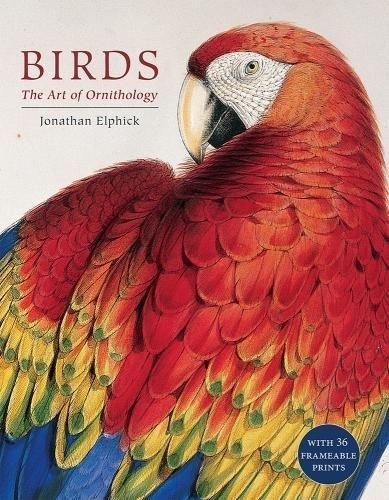 Birds - Pictures Bird Antique