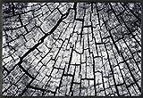 wash+dry Timber Fußmatte Acryl grau 50 x 75 x 0.7 cm