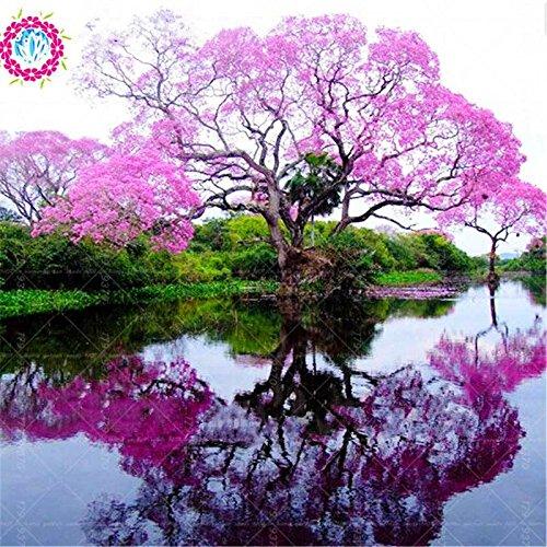 100 / bag rari semi paulownia rosa (albero principessa o albero imperatrice) piante perenni ourdoor semi di fiori piante giardino di casa pot 1