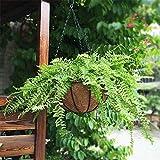 Cestello per fioriera con fioriere da Interno/Esterno Fioriere da Giardino Cestino da Appendere a 8 Pollici Cestino da Appendere