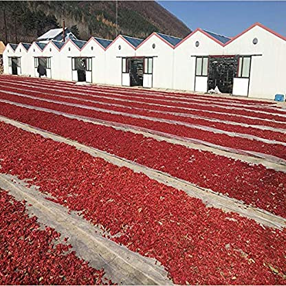 100g-022LB-Bestnote-Schisandra-Beeren-Schisandra-Tee-Krutertee-duftender-Tee-Blumentee-Botanischer-Tee-Krutertee-Grner-Tee-Roher-Tee-Grnes-Essen-Blumen-Tee-Gesundheit-Tee-Chinesischer-Tee