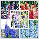 Pinkdose® Blumensamen: Lark'S Claw Blumensamen Mehrjährige Vögel, die Blumensamen anlocken (13 Pakete) Garten Pflanzensamen von