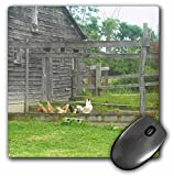 3dRose LLC 8 x 8 x 0.25 Inches Mouse Pad, Country Chicken and Rooster Pen with Barn (mp_44919_1)