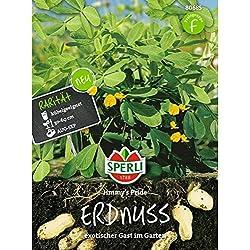 Sperli Gemüsesamen Erdnuss Jimmy's Pride, grün