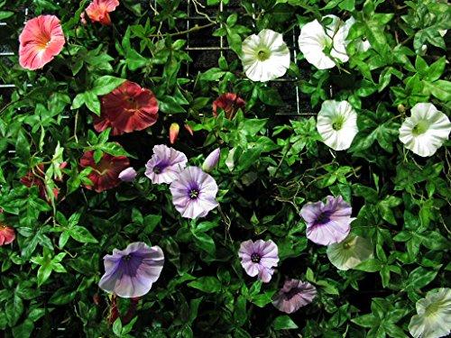 artplants Set 2 x Deko XXL Petunien-Hänger, lila, 95 cm – Künstliche Petunien/Kunstblumen