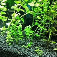 ZHOUBA - 50 semillas de acuario para acuario, hierba de agua, tortuga acuática, decoración de peceras