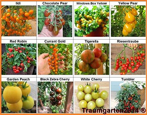 Traumgarten2014 Tomaten Set 3: Balkontomate Cherrytomate Cockteiltomate 12 Sorten je 10 Samen hohe Toleranz gegen Braunfäule Saatgut