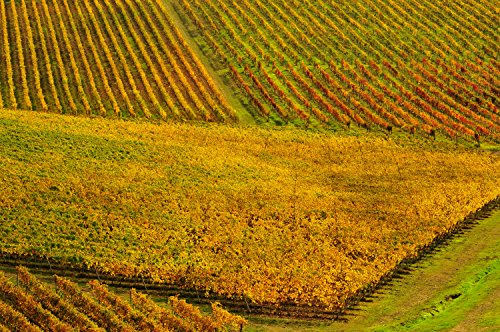 archive-sandro-santioli-tuscany-dsc7246-landscape-in-the-area-near-siena-close-to-val-dorcia-unesco-
