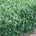 4 x Rankhilfe 90 x 70 cm Rankgitter Metallgitter Pflanzengitter Rankzaun grün von IHD auf Du und dein Garten