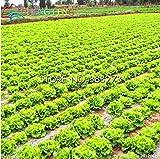 Portal Cool Schnell wachsender Salat 100Pcs Bonsai Seed-Baum-Blumen Pflanzen Dekor Hausgarten