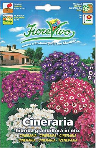 Hortus 60SDFC164 Fiorevivo Cineraria Hibrida Grandiflora, Mix, 13x0.2x20 cm
