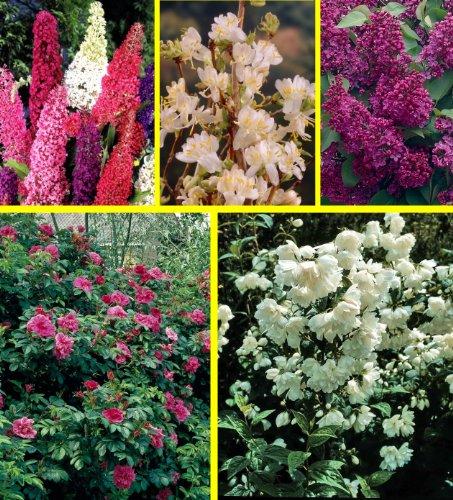 Dominik Blumen und Pflanzen 447105