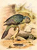 PAINTING ANIMAL PORTRAIT BIRD HULLMANDEL KAKAPO OWL PARROT ART PRINT LAH620