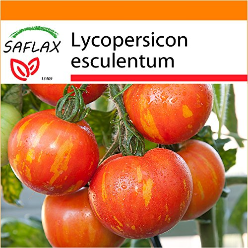 SAFLAX - Garden in the Bag - Tomate - Tigerella - 10 Samen - Lycopersicon esculentum