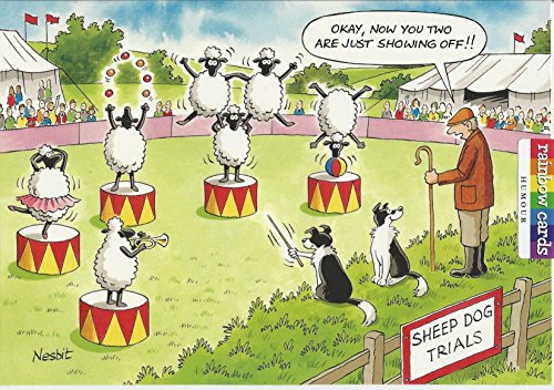 sheep-dog-showoffs-humourous-birthday-card-rainbow-cards-by-ling-design