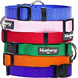 Blueberry Pet Better Basic Classic Solid Dog Collar in Orange Fusion, Neck 30cm-40cm, Small, Collars for Dogs, Matching Lead Available Separately