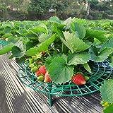 5er-Set Erdbeer-Reifer Erdbeerstütze Pflanzenhalter Gitterablage Schneckenschutz