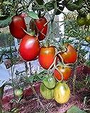 Tomaten Schwarze Pflaume - 5 Samen