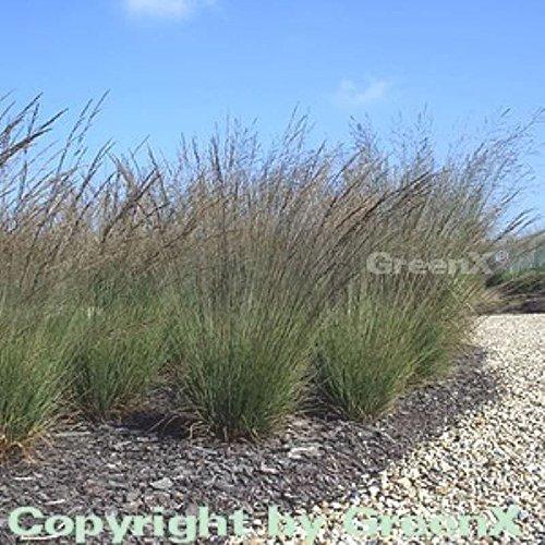 OBI Braune Blütenwedel