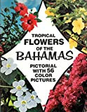 Tropical flowers of Bahamas.