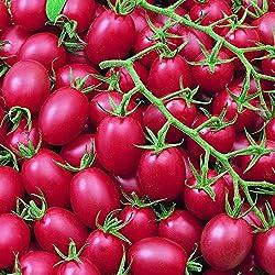 Cherrytomate - Tomate - Pink Grape - sehr ertragreich - süß - 10 Samen