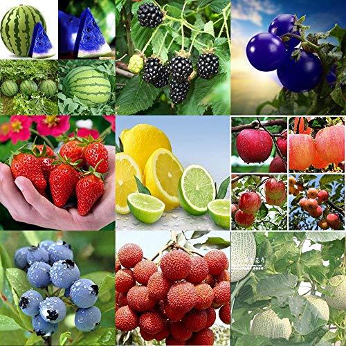 Portal Cool 100 Stücke Bunte Tomatensamen-W: Hausgarten Verschiedene Erbstück Gemüse Obst Samen Nicht-GVO Samen Bio-anlage