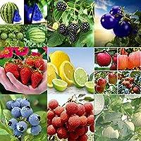 Portal Cool 100pcs plátano Semillas-Wu0741: Rare no GMO fruto comestible Vegetable Seeds Orgánica Planta de tomate Jardín plátano