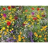 Cioler Seed House - Graines de fleurs sauvages rares Mélange de fleurs Mélange amical pour les abeilles et les abeilles