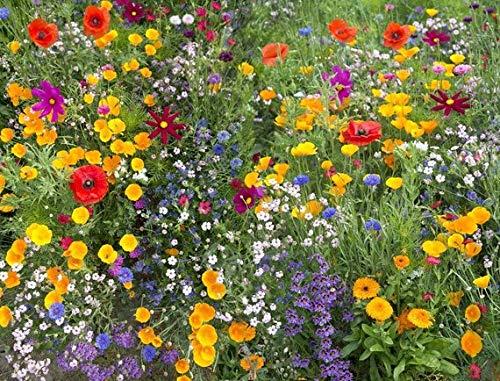 kisshes giardino - semi di fiori selvatici rari mix di fiori butterfly & bee friendly mix semi di prato semi di perenne hardy
