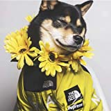 bandera roja, M abrigo para perros sudadera con capucha para perros Elegante Pupreme/&The Dog Face ropa para perros ropa para mascotas algod/ón y bandera roja esponjosa