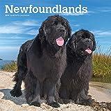 Newfoundlands - Neufundländer 2019 - 18-Monatskalender mit freier DogDays-App (Wall-Kalender)