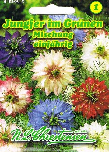 Jungfer im Grünen Mischung , einjährig, hervorragende Gruppenpflanze 'Nigella damascena'