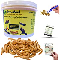 Pro-Meal Live Larvae Mealworms - Hight Protien Treat Food for Aquarium Fishes like Arowana, Flowerhorn and Birds…