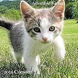 Adorable Kitten 2018 Calendar: Cute Baby Cat Monthly Calendar