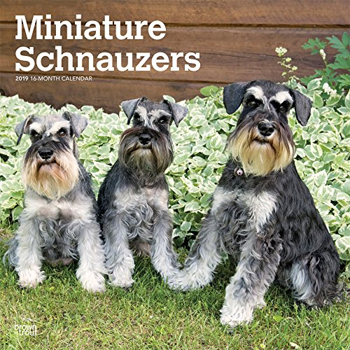 Miniature Schnauzers - Zwergschnauzer 2019 - 18-Monatskalender mit freier DogDays-App: Original BrownTrout-Kalender [Mehrsprachig] [Kalender]