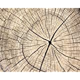 AOFOTO 10x8ft Vintage Wood Circle Texture Slice Photography Background Tree Rings Backdrop Sawn Timber Adult Old Man Kid Baby Artistic Portrait Nostalgia Photoshoot Studio Props Video Drape Wallpaper