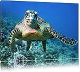 Schildkröte über Korallenriff Format: 100x70 auf Leinwand, XXL riesige Bilder fertig gerahmt mit Keilrahmen, Kunstdruck auf Wandbild mit Rahmen, günstiger als Gemälde oder Ölbild, kein Poster oder Plakat