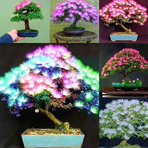 Qulista Samenhaus - 20pcs Raritäten Baumsamen Regenbogen Farbe Blütenmeer Blumensamen Bonsai winterhat mehrjährig