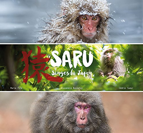 Saru : Singes du Japon